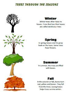 Seasons homework ideas